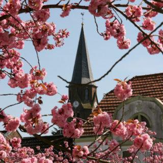 Kirch-Mandelblüte ;-)