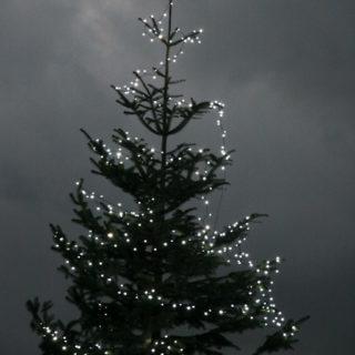 Weihnachtsbaum in Manheim-Neu